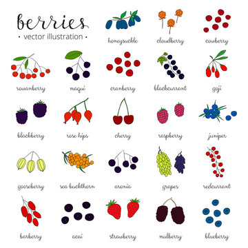Hand drawn berries isolated on white background.