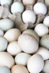 Fresh natural raw organic egg