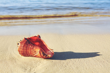 Sea shell on tropical beach. Summer sea landscape.