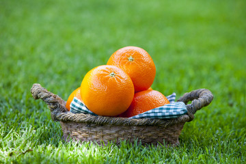 Mandarin Basket Summer Garden
