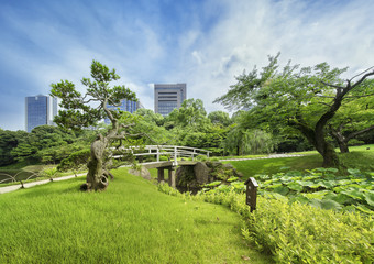 Japanese bridge surrounded by beautiful pines, maples and cherry trees separates lake and stall filled with lotus.