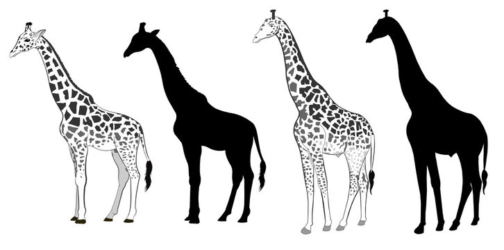 Wild animals silhouette, giraffe