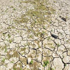 Dried-out cracked riverbed, Rhine, North Rhine-Westphalia, Germany