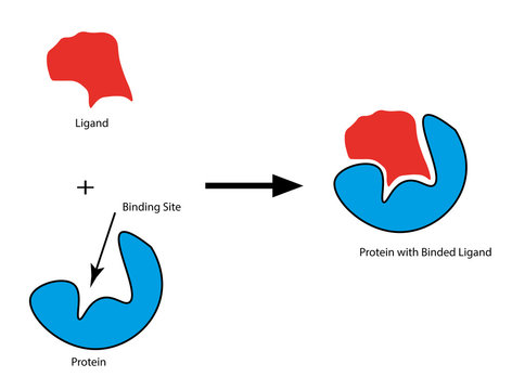 Protein Ligand Docking