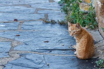 Gato joven en la calle. Puebla de Sanabria, Zamora, España.