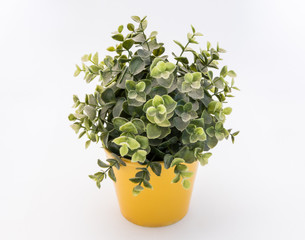 Green  plastic decorative flower in a yellow plastic pot is on a white background