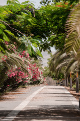 alley with blooming flowers and palm trees