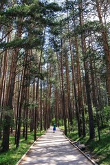 Young man surrounded by tall trees, taking pictures while walking on a wooden path that leads to the source of the Cuervo River, in the mountains of Cuenca, Spain.