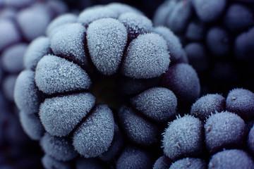 Blackberry fruit frozen