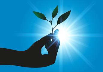 écologie - nature - plante - main - concept - environnement - vie - agricole - croissance