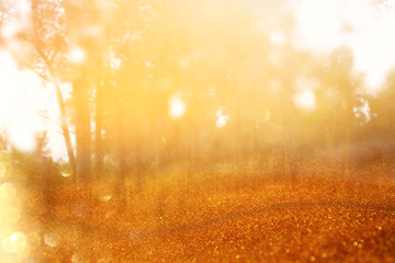blurred abstract photo of light burst among trees and glitter golden bokeh lights.