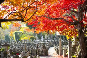 Beautiful scene inside Adashino Nenbutsu Ji temple in Kyoto during Autumn.