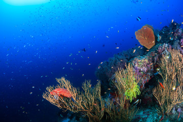 Hundreds of tropical fish swim around a colorful coral reef