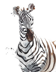 Zebra wildlife animal African safari head portrait watercolor painting illustration isolated on white  background
