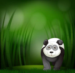 A panda on green bamboo background