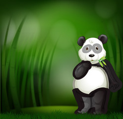 Cute panda in a bamboo forest