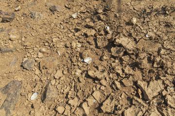 Leere Muschelschalen in einem ausgetrockneten Flußbett
