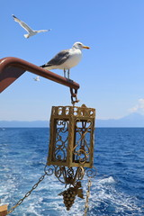 Mediterranean gull on the background of sea and blue sky