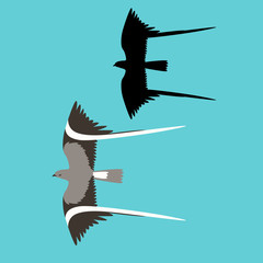 pennant winged nightjar  bird vector illustration flat