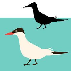 arctic tern bird vector illustration flat style black silhouette