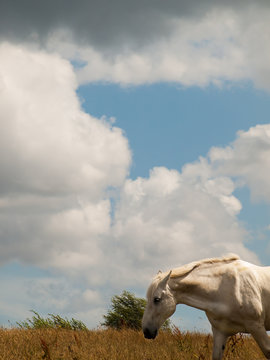 White horse and sky