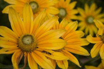 Gelbe Blume im Garten