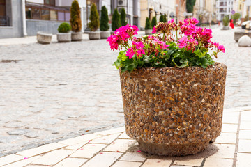 Large flower pot with blooming red geranium. Street decoration. City landscape design