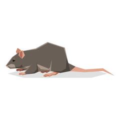 Flat geometric Rat