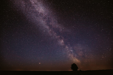 Milky Way Galaxy In Night Starry Sky Above Lonely Tree In Summer