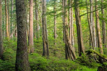 Rain Forest in Haida Gwaii, British Columbia, Canada.