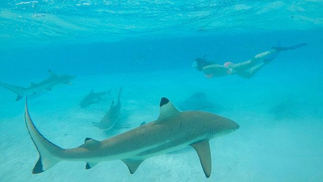 UNDERWATER: Woman snorkeling in turquoise ocean swims behind blacktip sharks.
