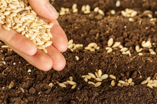 Human hand holding grains and gardening