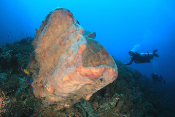 Sponge on coral reef with scuba divers in background