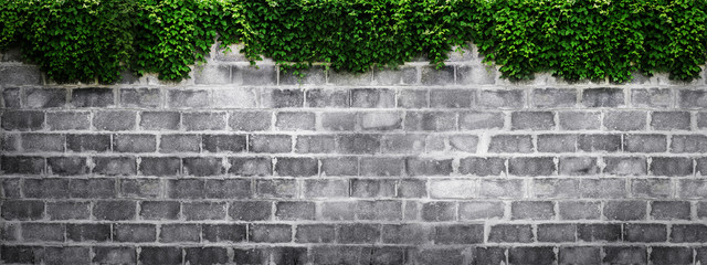 brick wall with green leaf