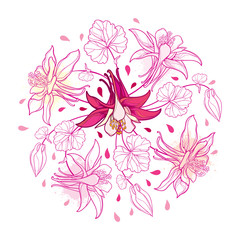 Vector round bouquet with outline Aquilegia or Columbine flower, bud and leaf in pastel pink isolated on white background. Composition with contour ornate Aquilegia for summer design.