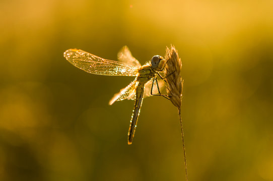 dragonfly in the grass