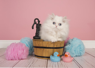 White persian longhair kitten sitting in a bathroom tub in a studio bathroom setting on a pink background