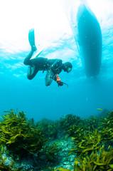 明るい水中で獲物を探す海女