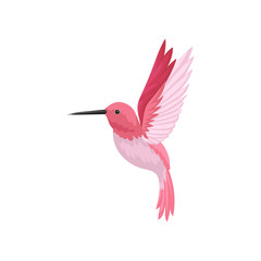 Flat vector icon of flying hummingbird. Colibri with pink feathers and long thin beak. Wildlife and fauna theme