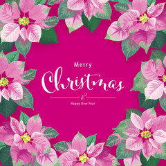 Poinsettia flowers in pink and green color frame on purple background. Vector set of Christmas elements for holiday invitations, greeting card and advertising design.