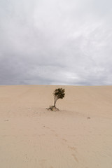 The Desert on Moreton Island in Queensland Australia