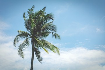 palm coconut tree on the blue sky. - vintage style