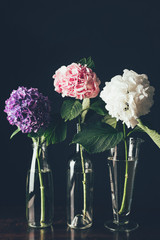 beautiful pink, white and purple hortensia flowers in glass vases in row, on black