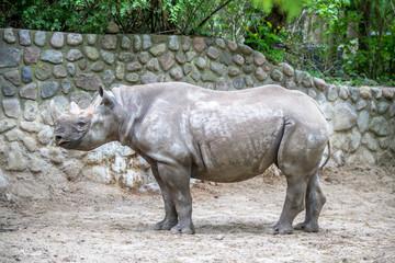 Rhino in a Zoo, Berlin
