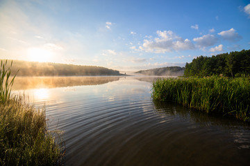 foggy lakeside at summer sunrise with tall grass