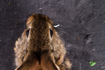 Brown, small, furry, homemade rabbit on a dark background. Rabbit ears