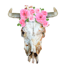 Bull or cow scull with horns, decorate roses. Isolated on white background