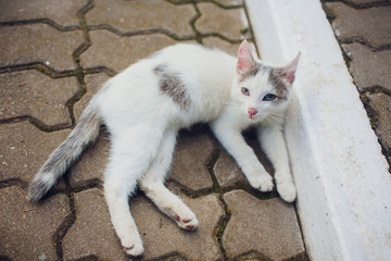Cat lying on back enjoy sun shine in park