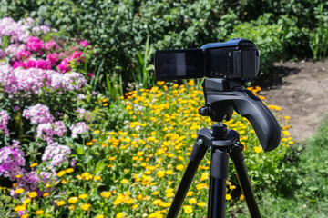 Camcorder on a tripod in the garden shoots flowers