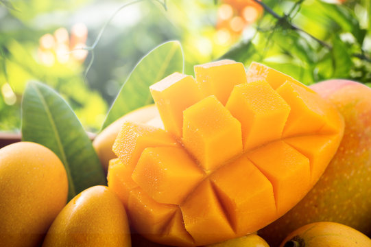 Fresh and beautiful mango fruit in a bamboo basket on nature backgrounds, copy space(text space), blank for text.